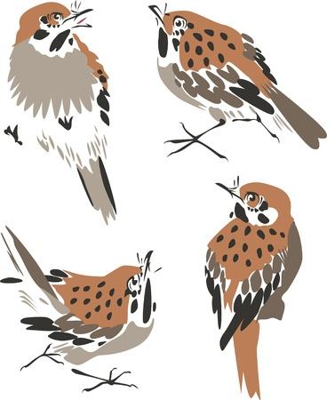 sparrow illustration Stock Vector - 9424505