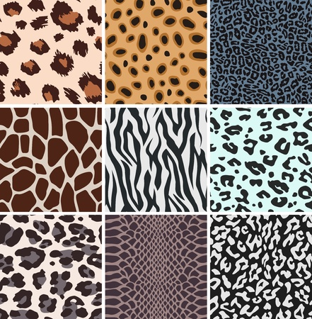 animal paw prints:  animal skin textures Illustration