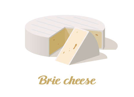 Brie cheese. Realistic cheese on white background. Vector illustration. Collection