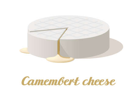Camembert cheese. Realistic cheese on white background. Vector illustration. Collection