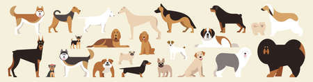 Different breed dogs set. Isolated dogs on light background. Flat cartoon. Vector illustration. Collection