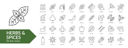 Herbs & spices line icon set. Isolated signs on white background. Vector illustration