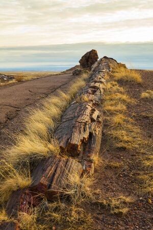 Log by road, Petrified Forest National Park, Arizona in USA