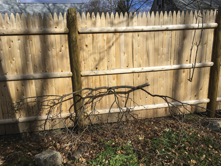 Wooden fence for residential property 版權商用圖片
