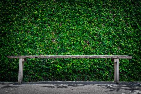 wall ivy: Banco de madera solo en la pared del parque y la hiedra Foto de archivo