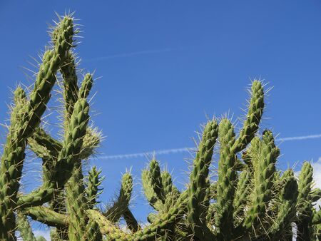 A cactus in front of a blue sky