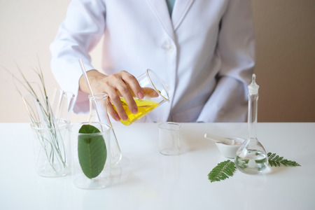 scientist hand prepare to pour oil  into the beaker.laboratory room  with leaves,glassware,cosmetic bottle.health and beauty natural organic product concept.herbal medicine. making cosmetic on table. Stock Photo