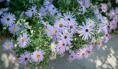 nature background.natural purple little flower . Zdjęcie Seryjne