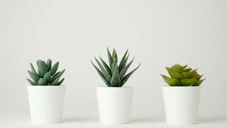 minimal plant pot for decoration and mock up . decorative cactus potted.