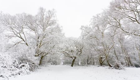 Winter scene with trees covered in snow Stock Photo - 4358470