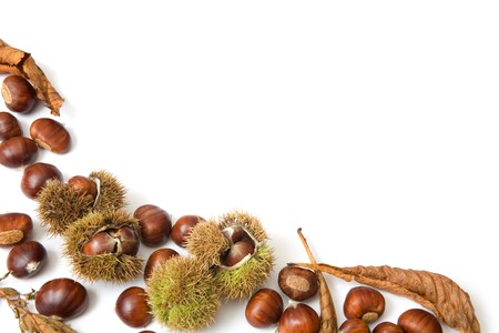 Autumn template of chestnuts isolated on white with copy space photo