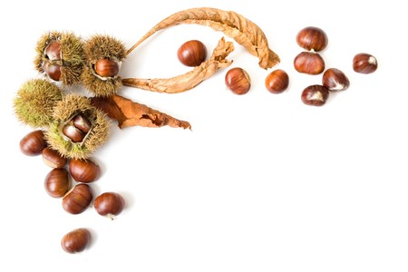 scattered on white background: Autumn template of chestnuts isolated on white with copy space