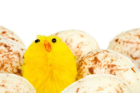 whitespace: Easter chick with easter eggs and white background