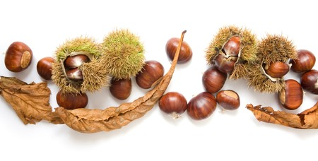 Autumn banner of chestnuts isolated on white photo