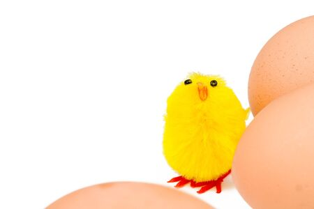 Easter chick and real eggs isolated on white with copyspace photo