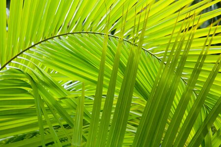 fronds: Palm frond details ideal for a jungle background Stock Photo