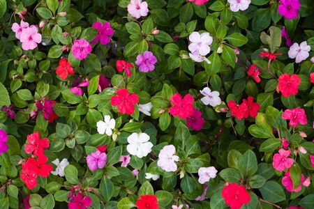 Closeup of a flower bed with red, purple, pink and white flowers photo