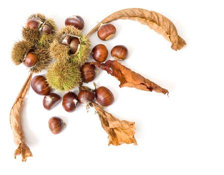 Autumnal chestnut design isolated on white Stock Photo - 4866222