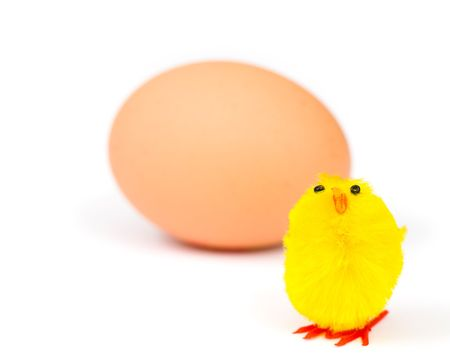 Easter chick with real egg isolated on white photo