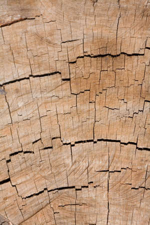 Tree rings closeup ideal for an organic background or texture photo