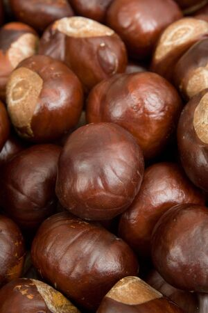 Closeup of conkers or horse chestnuts photo