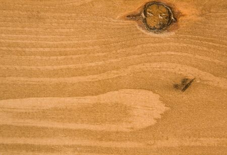 Detail of pine wood photo