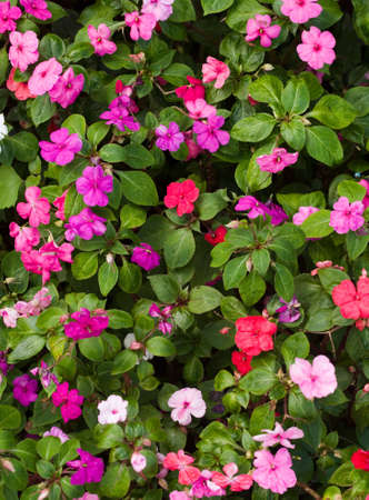 Different coloured flowers in a garden bed photo
