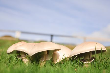 Field of mushrooms beneath a blue sky photo