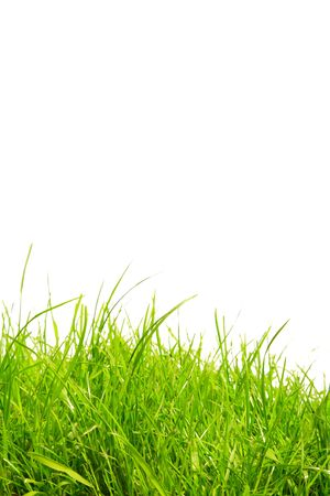 hayfever: Grass background with copy space Stock Photo