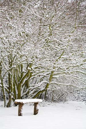 Snow covered bench in woods photo