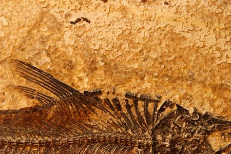 Detail of a fossil Eocene fish on a textured sandstone background photo