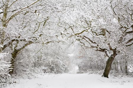 snow falling: Snow covered woodland scene with copy space