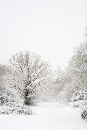 Snow covered trees in a winter woodland scene photo