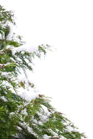Snow-covered christmas tree border, isolated against a white background with copy space photo