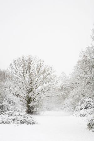 neige qui tombe: La neige recouvre les arbres dans une sc�ne de for�t en hiver Banque d'images
