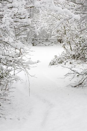 wintery: A gate and trees covered in snow in a wintry countryside scene Stock Photo
