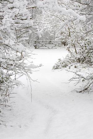 forrest: Een site-gate en bomen vallen in de sneeuw in een wintry platteland scène Stockfoto