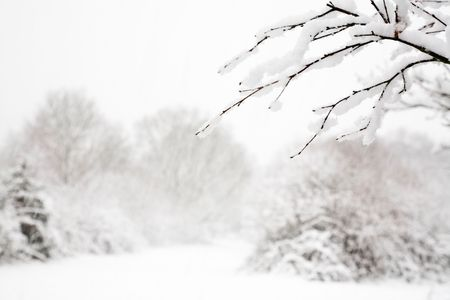 Woodland snow scene with a fresh cover of snow on branches photo