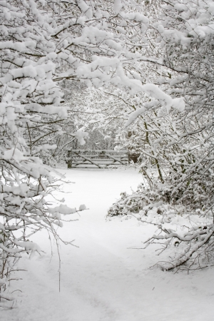 A gate and trees covered in snow in a wintry countryside scene photo