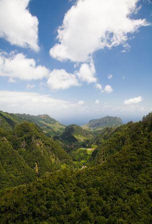 Rainforest of Madeira viewed from Ribeiro Frio Banco de Imagens