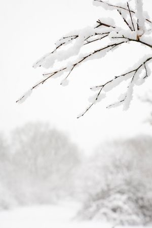 Woodland snow scene with a fresh cover of snow on branches Stock Photo - 6177380