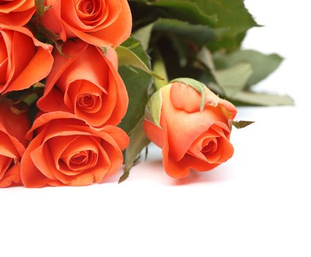 Bouquet of orange roses isolated on a white background with copyspace photo