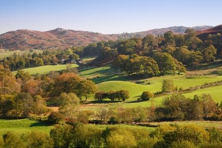 campi�a: Laminaci�n en campo con campos verdes y bosques. Langdale, distrito de los lagos, en el condado de Cumbria, UK Foto de archivo