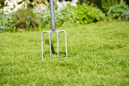 spading fork: Garden lawn with a fork stuck in the grass, to depict aerating the lawn