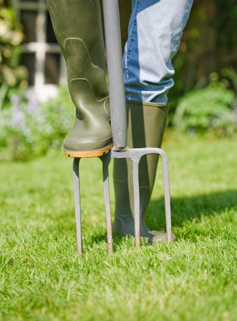 wellies: Woman gardener aerates garden lawn with a fork