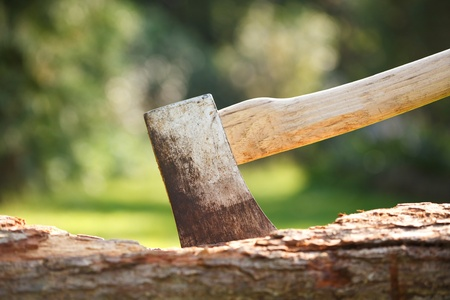 chopping: Closeup of a single bit axe with hickory handle