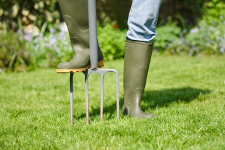 Woman aerating the garden lawn with a digging fork photo