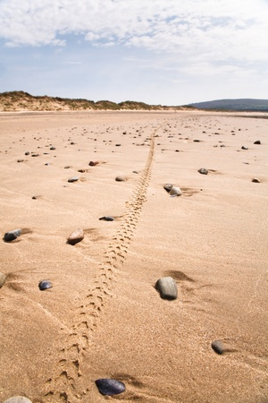 Single mountain bike tyre track along a remote beach in Wales photo