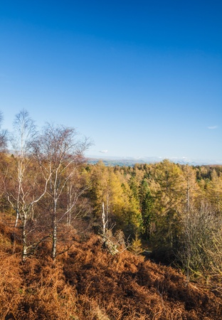 woodland scenery: Blue sky and countryside in the Lake District of Cumbria, UK Stock Photo