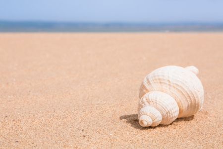 Seashell on a beach with blue sky and space for text photo